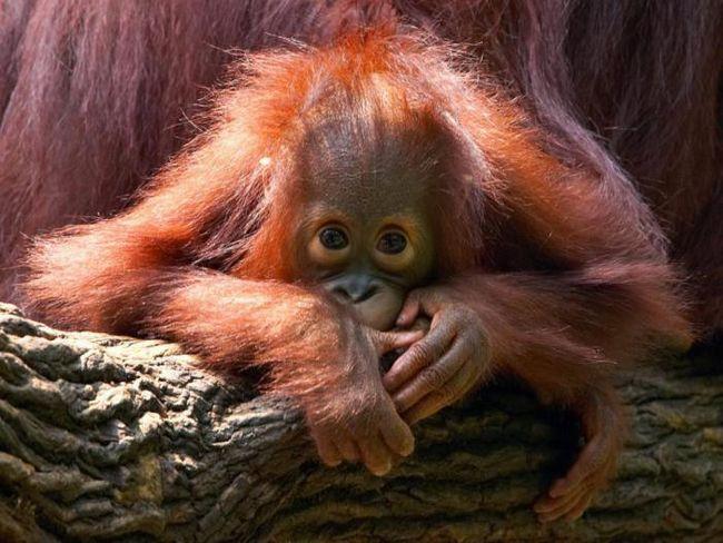 12 Редки животни, които са на ръба на изчезване