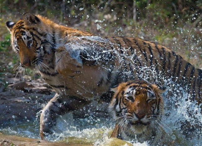 14 Удивителни снимки на дивата природа на Индия