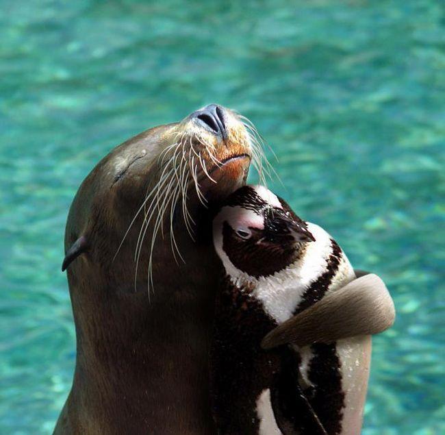 15 Наистина странни примери за приятелство между животните, които успяха да уловят камерата