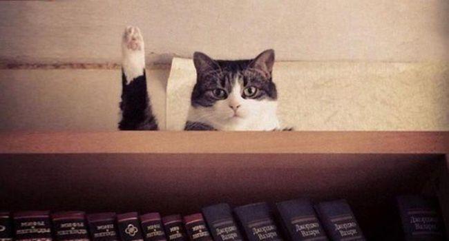 20 Снимки на котки, направени в точния момент