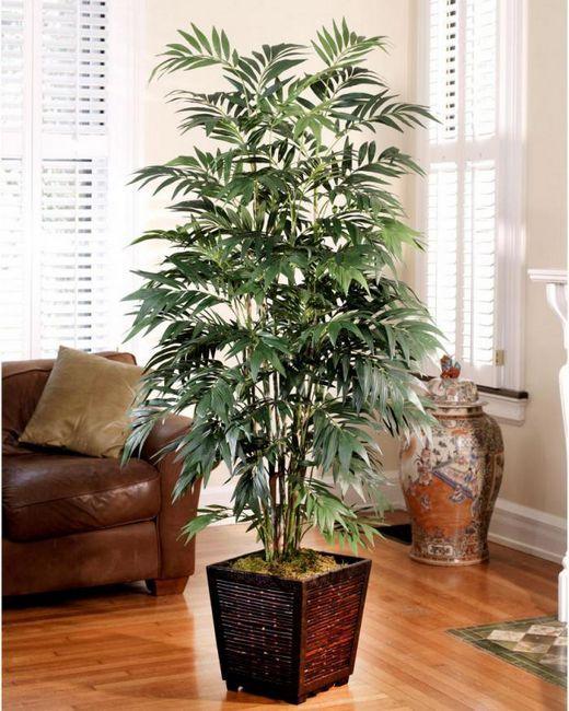 5 Най-добри вътрешни растения, които пречистват въздуха