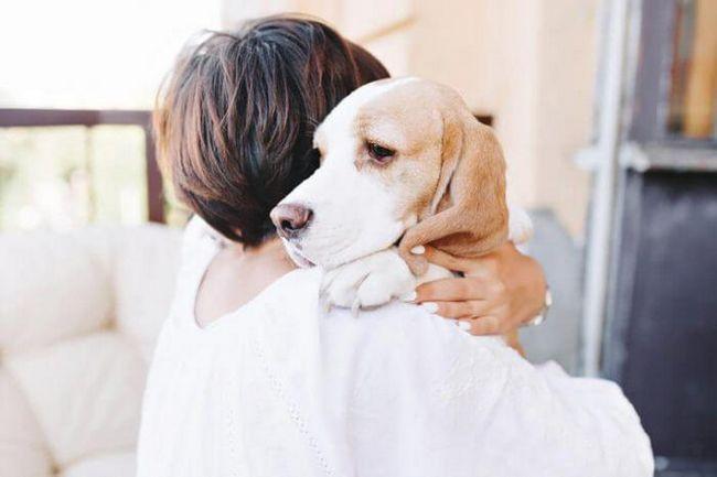 8 Незабележими симптоми на грип при куче, за които все още си струва да се обърне внимание