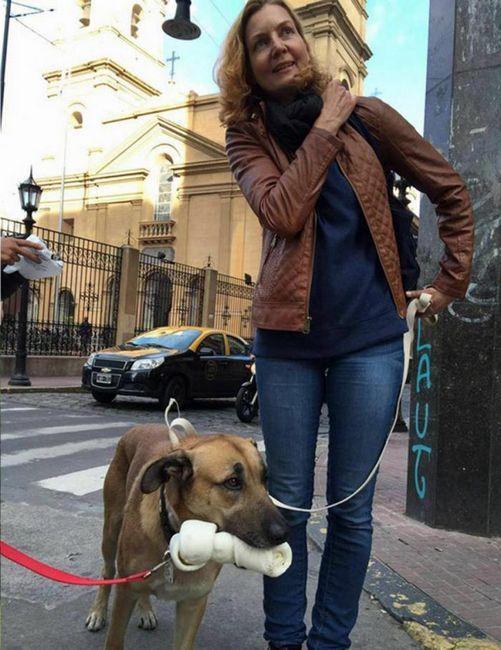 Бездомни куче, което убедило стюардесата да го заведе в себе си