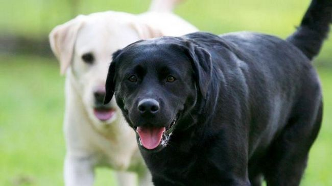 Каква порода кучето ви може да разкаже за вашата личност?
