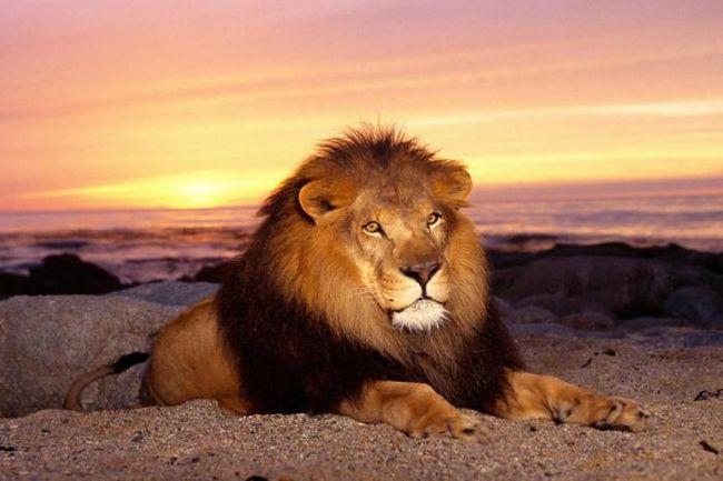 Децата трябва да знаят това за царя на зверовете