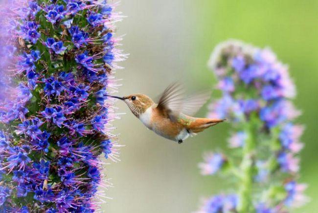 Къде са най-добрите места за наблюдение на птици в Европа?