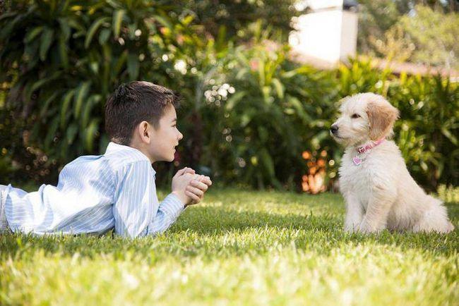 Искате ли да се научите да разбирате вашия домашен любимец? Това ще стане реалност след 10 години