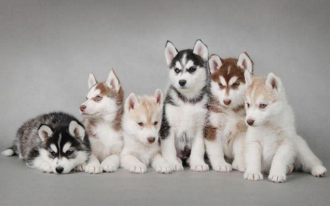 Искате да имате кученце? 14 неща за купуване за домашен любимец