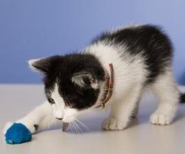 Играчки за котенца собствени ръце: дават радост на вашия пухкав бучка