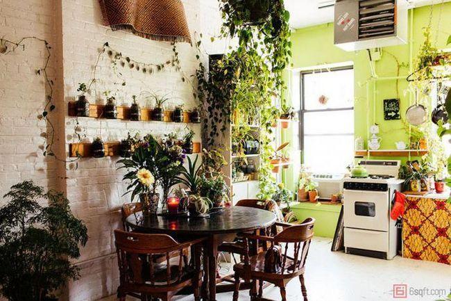 Тази жена превърна апартамента в истинска джунгла