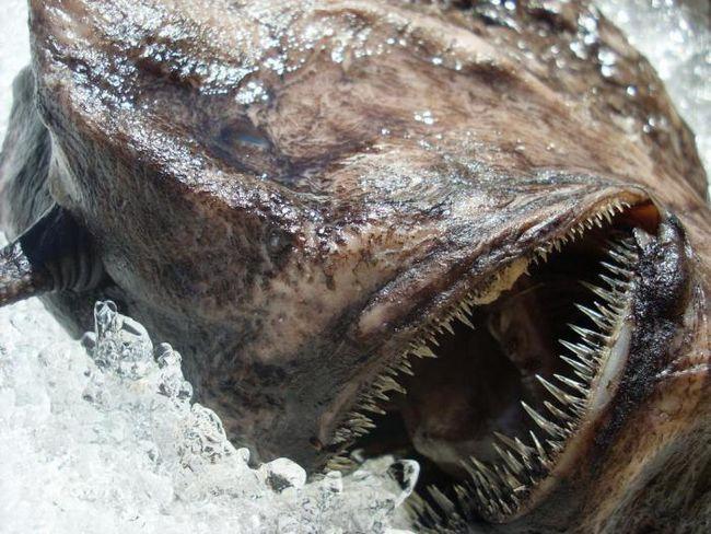 Тези акули-призрак и дълбоководните демони могат да изплашат всякакви