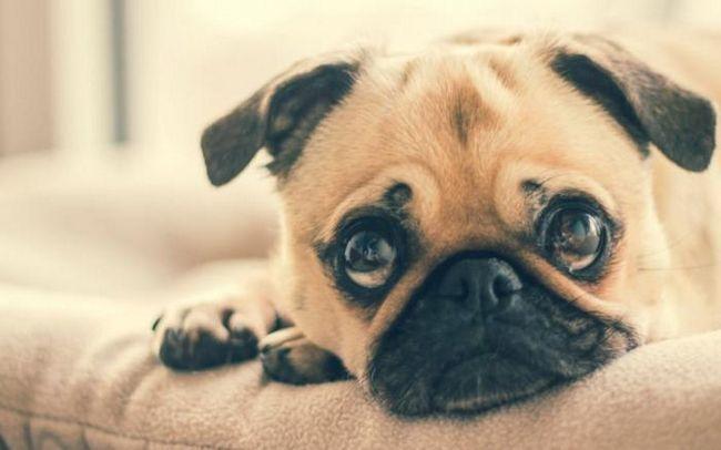 Всеки собственик трябва да знае това: 10 признаци, че кучето ви има стрес