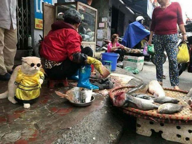 Този очарователен котка-продавач на риба от Виетнам стана новата звезда на интернет