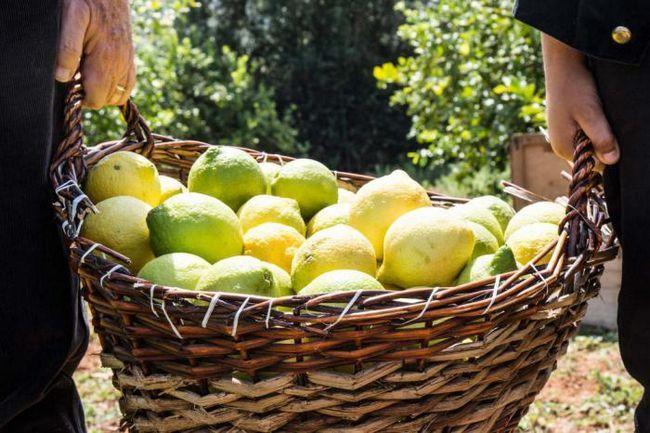 Как лимоните доведоха до просперитета на една от най-големите престъпни организации в света?
