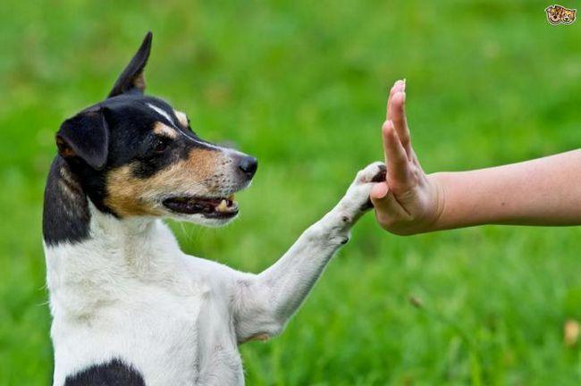 Как да комуникираме правилно с кучето си?