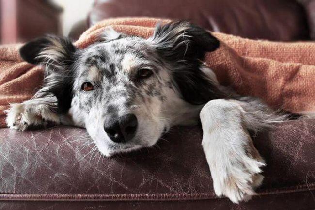 Как да направите кучето си щастливо? Обърнете внимание на това, което тя очаква от вас