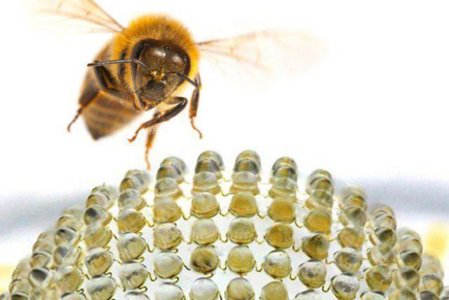 Как насекомите виждат света? Как хората виждат мухи? Интересни факти за очите на насекомите.