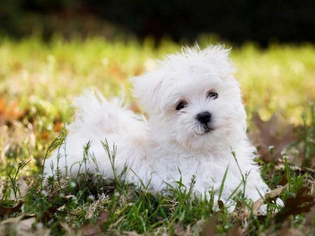Как да изберем приятел с четири крака: 11 най-добри породи кучета