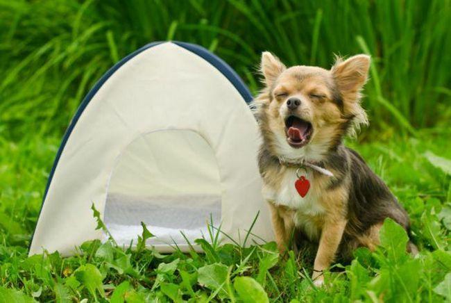 Харесва ли ви да пътувате с кучето си? Топ 10 най-добри европейски дестинации