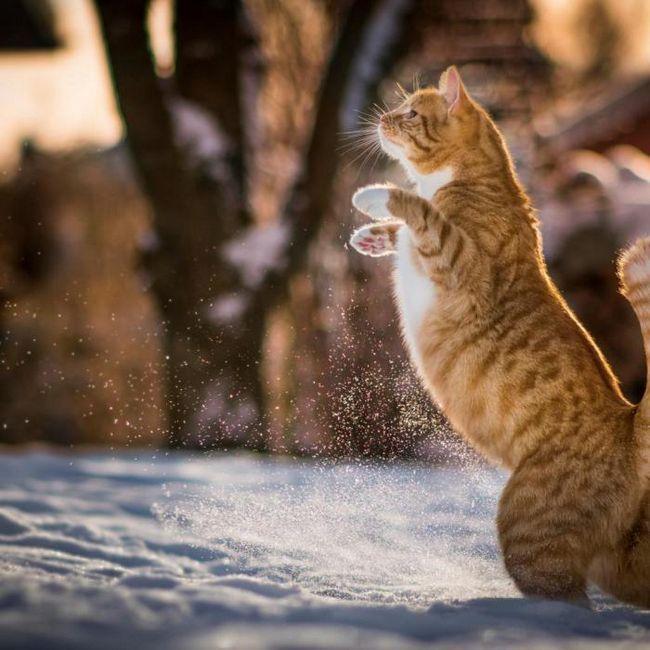 Защо котката стои на задните си крака: 6 причини