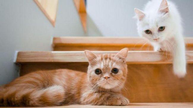 Причините, поради които трябва да купите втора котка