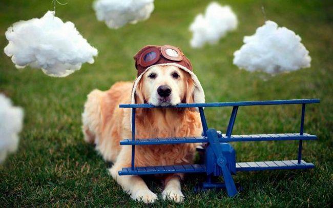 Трябва ли кучетата да почиват от ежедневието, както и от хората?
