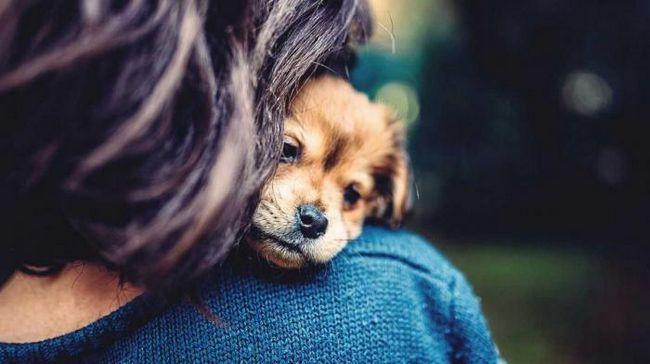 Кучетата показват повече емоции, когато им обръщаме внимание