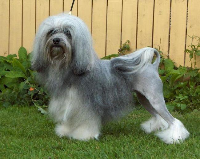 Топ 20 най-скъпи породи кучета в света