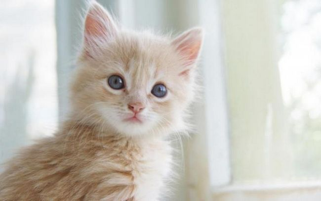 Най-накрая учените са успели да разчитат израженията на котките на лицето