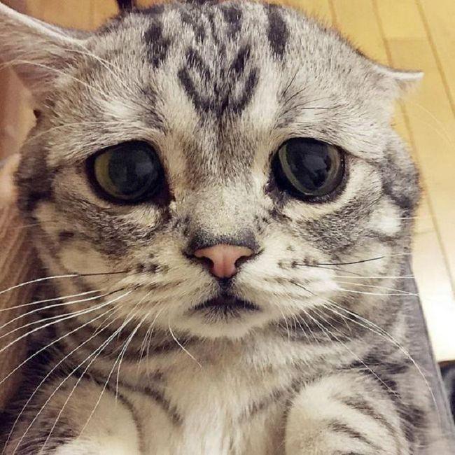 Запознайте се с Lou - най-тъжната котка в света, снимка на която ще ви разбие сърцето